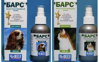 Izsmidziniet bārus no blusām kaķiem un suņiem