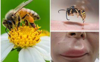 Ko darīt, ja bišu mazulis lūpā
