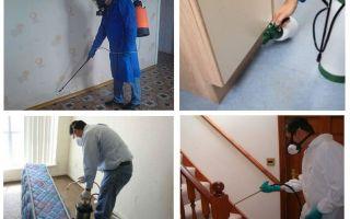 Dezinsekcija no blusām dzīvoklī ar profesionāliem pakalpojumiem