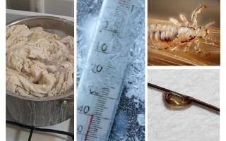 Kādā temperatūrā utis un nits mirst?