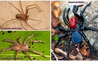 Visbīstamāko zirnekļu apraksts un fotogrāfijas pasaulē