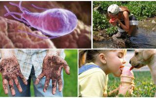 Lamblia cistas bērna ekskrementos: kā tās izskatās un kā tās ārstēt