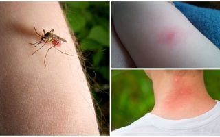 Kāda ir atšķirība starp moskītu kodumu un kļūdu vai ērču iekost?