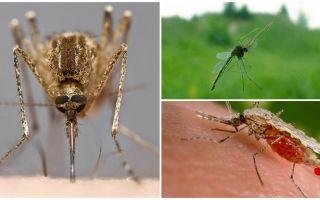 Kā odi redz un ko tie piesaista cilvēkiem
