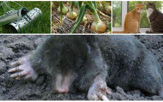 Tiesiskās aizsardzības līdzekļi molu vasarnīcā un dārzā
