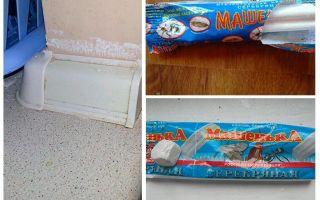 Pencil Masha no bedbugs