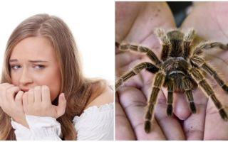 Kāds ir bailes no zirnekļiem (fobija) un ārstēšanas metožu nosaukums