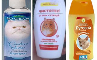 Cik bieži jūs varat mazgāt ar blusu šampūnu