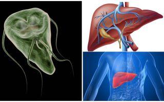 Giardia aknās - simptomi un ārstēšana