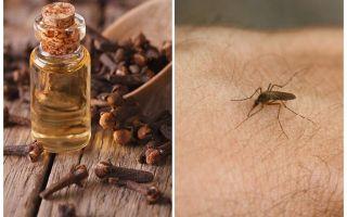 Krustnagliņa eļļa pret odiem