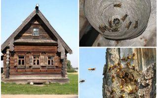 Kā iegūt bites no koka mājas un citām vietām