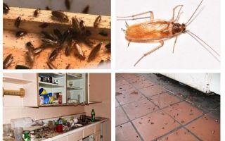 Ko darīt, ja virtuvē redzējāt tarakānu