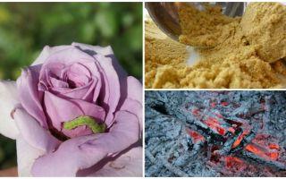 Kā izsmidzināt rozes no kāpuriem un laputīm