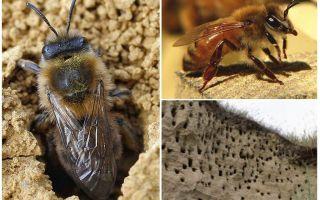 Kā no zemes noņemt bites