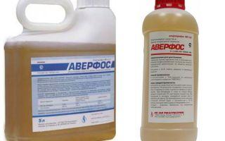 Līdzekļi Averfos no bedbugs