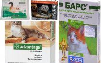 Mārciņas uz kaķiem un kaķēniem
