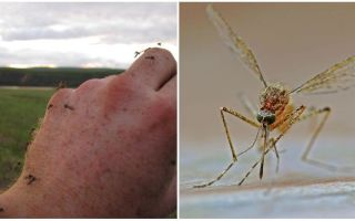 Kurās valstīs un pilsētās nav odu