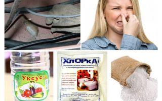 Kā atbrīvoties no peles smakas