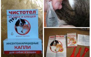 Blusu strutene pilieni kaķiem un suņiem