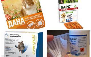 Labākie blusu aizsardzības līdzekļi kaķiem