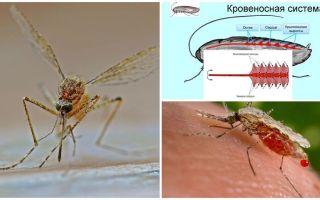 Interesanti fakti par odu struktūru