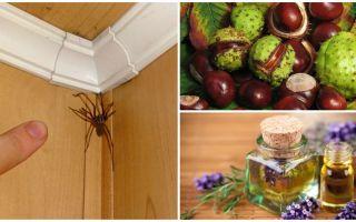 Metodes un rīki zirnekļiem dzīvoklī vai privātmājā