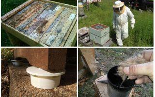 Kā atbrīvoties no skudras bišu tautas aizsardzības līdzekļos