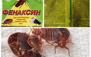 Pulveris Fenaxin no bedbugs