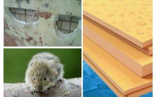 Vai peles ēd ekstrudētu putu polistirolu