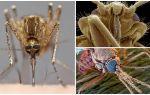 Mosquito plašākā skatā