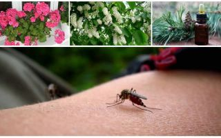 Kā tikt galā ar odiem dzīvoklī vai mājā