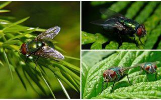 Zaļo kārbu lidojuma apraksts un fotogrāfija