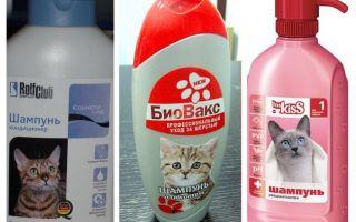 Blusu šampūni kaķēniem un kaķiem