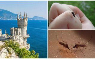 Vai Krimā ir odi