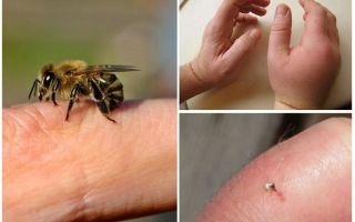 Kas ir noderīga bišu dzīsla cilvēkam?