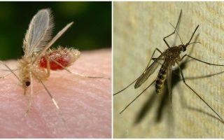 Kāda ir atšķirība starp odiem un odiem