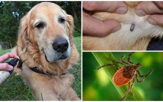 Smidzinātāji suņiem pret ērcēm un blusām