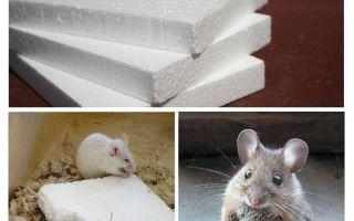 Vai pelēm ir putas