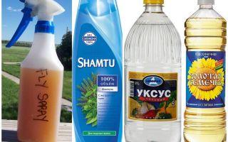 Matu-atbaidošu odu atbaidīšanas šampūns + etiķis