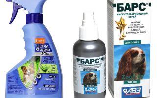 Labākais blusu aerosols suņiem