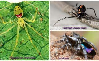 Skaistākie pasaulē zirnekļi