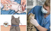 Kā atbrīvoties no blusām kaķī vai kaķī mājās