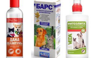 Populārākais un efektīvākais blusu šampūns suņiem