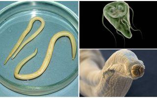 Giardia un Worms salīdzinājums