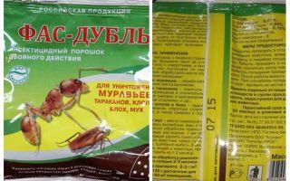 Nozīmē Fas Double un Super Fas no bedbugs