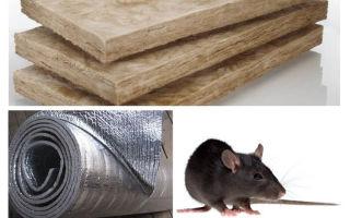 Kāda veida izolācija neēd žurkām un pelēm