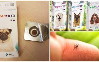 Tabletes Bravekto no ērcēm suņiem