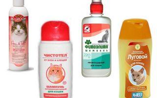 Labākie blusu šampūni