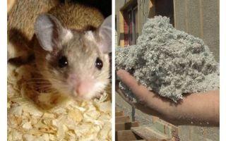 Kāda veida izolācija neēd pelēm
