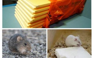 Vai peles ēd penoplex